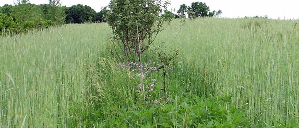 opgroeiende-bomen-site