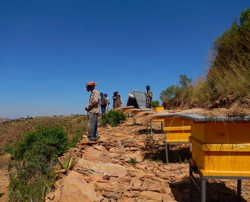 Bijen kunnen weer honing produceren